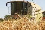 Zemědělci na jihu Moravy mají sklizeno přes dvě třetiny ozimého ječmene a skoro pětinu řepky.
