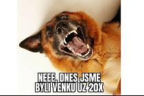 Psi to mají s novými vládními nařízeními těžké. Díky jejich venčení totiž lidé mohou svobodně a volně ven.