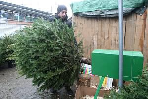 Prodej vánočních stromků