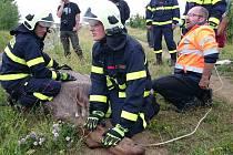 Los běhal po Brně. Odborníci ho museli za asistence hasičů a policistů uspat.