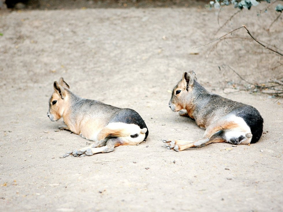 Vedra sužují i zvířata v brněnské zoologické zahradě.