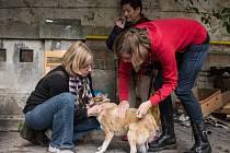 Bezplatně očkovat psa měli v úterý možnost všichni lidé bez domova. Na brněnskou akci, kterou ke dni Světového boje proti vzteklině pořádalo sdružení Veterináři bez hranic, zavítalo přes třicet zájemců.