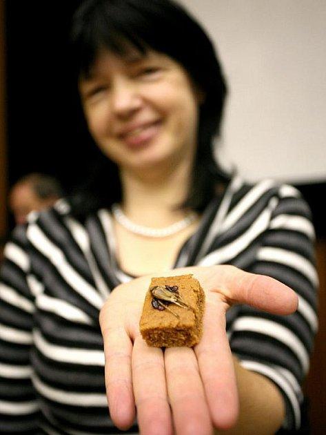 Přednáška Marie Borkovcové z Mendelovy univerzity o entomofágii, tedy pojídání hmyzu.
