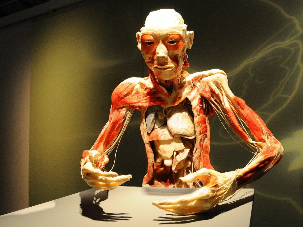 Výstava Bodies Revealed.