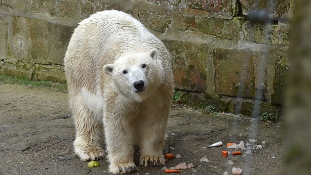 Vánoce v brněnské zoo