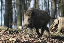 Lidé krmí zvířata v oboře Holedná. Ta si na to zvykají a potravu vyžadují. Někdy i agresivně.