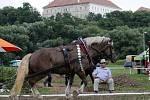 Tak trochu jinému parkuru mohli lidé přihlížet v sobotu odpoledne v Rosicích na Brněnsku. Na soutěž vozatajů se tam sjeli majitelé se svými statnými koňmi, kteří například předvedli, jak dokáží utáhnout náklad těžší než jednu tunu.
