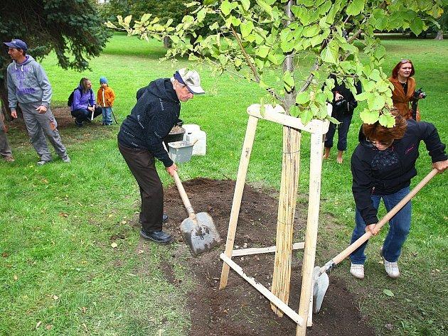 Zasazování stromu v brněnském parku Lužánky.