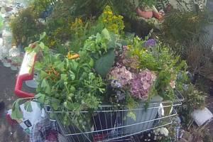 Žena v Brně vytrhala z veřejných prostranství květiny za dva tisíce korun. Dopadli ji brněnští strážníci.