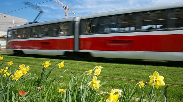 Tramvaje jezdí rozkvetlým pásem trávy a květin v ulici Nové sady. Dopravní podnik města Brna tak rozvinul myšlenku travních pásů, do kterých nechal vysázet narcisy a tulipány.