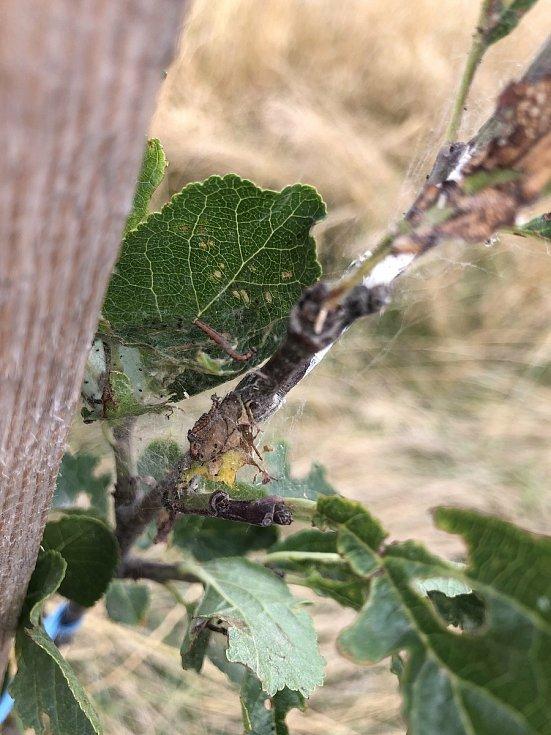 Kvůli zničeným ovocným stromkům se v Přibicích rozhořel spor. Starosta viní zemědělce, ti však obvinění odmítají.