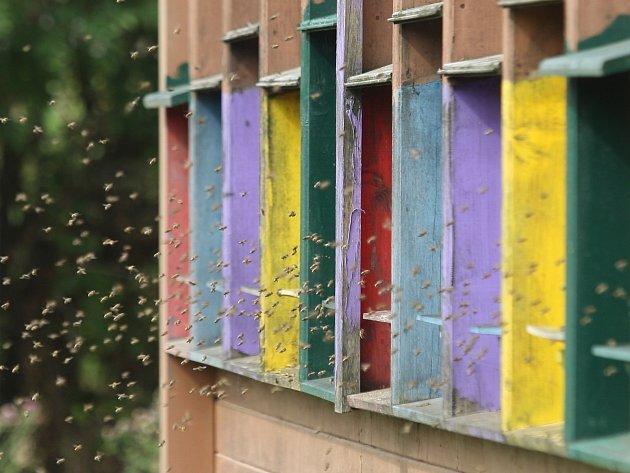 Zkušenému včelaři Václavu K. zMedlova na Židlochovicku někdo jedem postříkal úly, které stojí poblíž lesa.