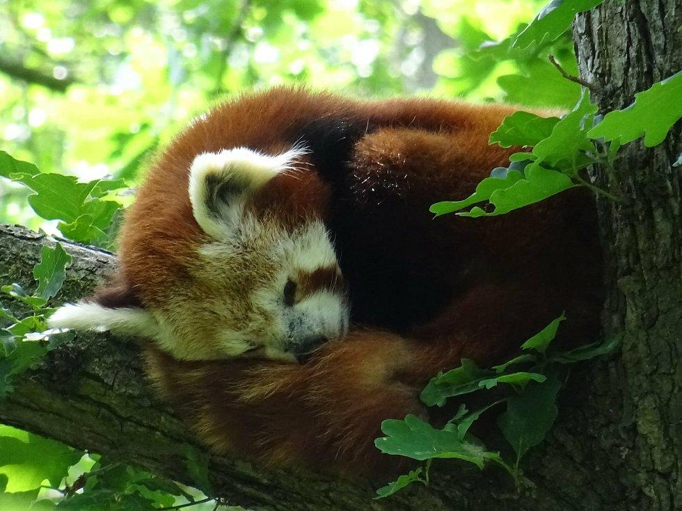 Uplynulý víkend si pozornost návštěvníků užívala všchna zvířata v Zoo Brno.
