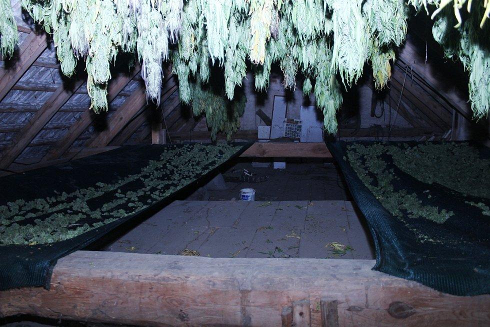 """Celníci odhalili """"smečku"""" pěstitelů marihuany. Našli u nich i extázi a samopal"""