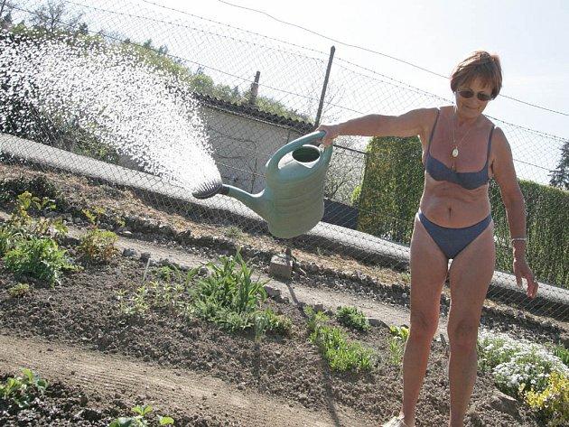Sucho se projevilo i v okolí Brna. Drobní pěstitelé museli poctivě kropit záhonky.