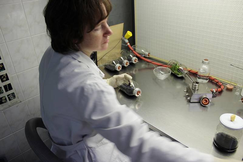 Laboratoře Mendelovy univerzity. Ilustrační foto