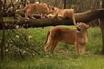 Zvířata v brněnské zoo.