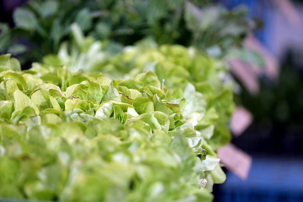 Náměstí Zelný trh opět dostálo svému jménu. Několik prodejců zeleniny a květin mohlo díky uvolněním protiepidemických opatření opět rozložit své stánky.