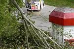 Silný vítr neustál ani Brněnský strom roku 2017. Topol bílý, který je starší než tamní sídliště Vinohrady, přišel o část koruny.