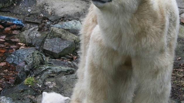 Medvědí rodinka v brněnské zoo.