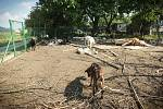 Zahrádkářská kolonie Netopýrky v brněnském Komíně. Lidé si stěžují na zápach od stáda koz.