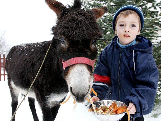Ořešínskou oslici Lízu děti milují.