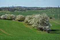 Výlet kolem sadů ve Starém Lískovci vedl dále do Ostopovic a zpět.
