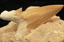 Geologicko–paleontologické oddělení se může pochlubit různými zkamenělinami.