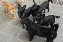 Šest pětiměsíčních štěňat zachraňovali před bouřkou brněnští strážníci.