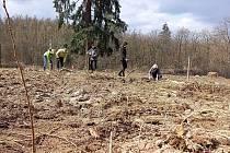 Dobrovolníci z Lipky sázeli stromy v Brně-Soběšicích.