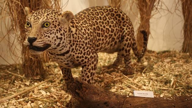 Nová výstava brněnské zoo má za úkol poučit návštěvníky o zodpovědnosti za ohrožené druhy fauny a flóry každého člověka. Exponáty jsou k vidění v Radnické ulici.