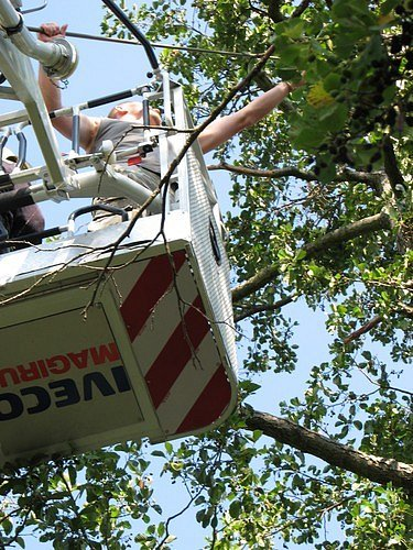 K záchraně leguána z koruny stromu vyjížděli ve čtvrtek odpoledne hasiči do Břehové ulice v Brně-Obřanech.