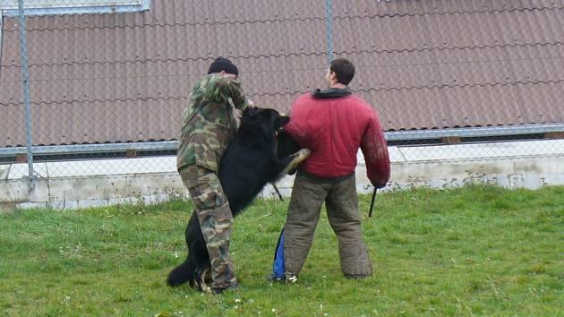 Městská policie vycvičila tři nové psy.