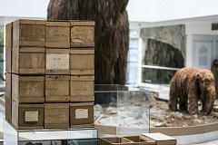 Mamuta obklopí moderní umění. V Anthroposu začala nová výstava