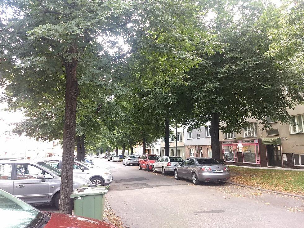 Lipová alej v brněnské Vodově ulici.