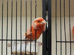 Výstava exotického ptactva na Přírodovědecké fakultě Masarykovy univerzity v Brně.