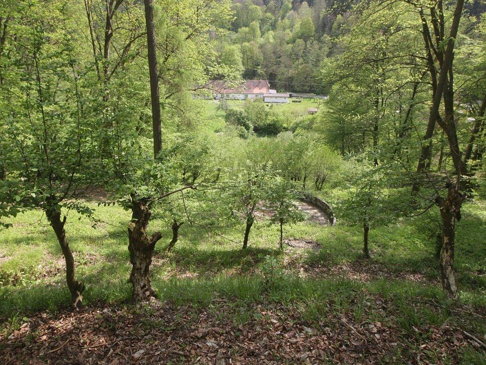 Památkáři a správci hradu Pernštejn se snaží o záchranu unikátní zahrady.