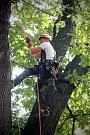 Jeden z nejstarších stromů v Lužánkách, dub uherský, je v pořádku a vyvrácení mu nehrozí. Vyplývá to z výsledků úterního testování, které měli za úkol zaměstnanci Veřejné zeleně města Brna.
