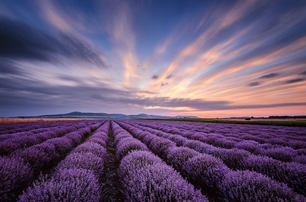Levandulové pole ve francouzském Provence.