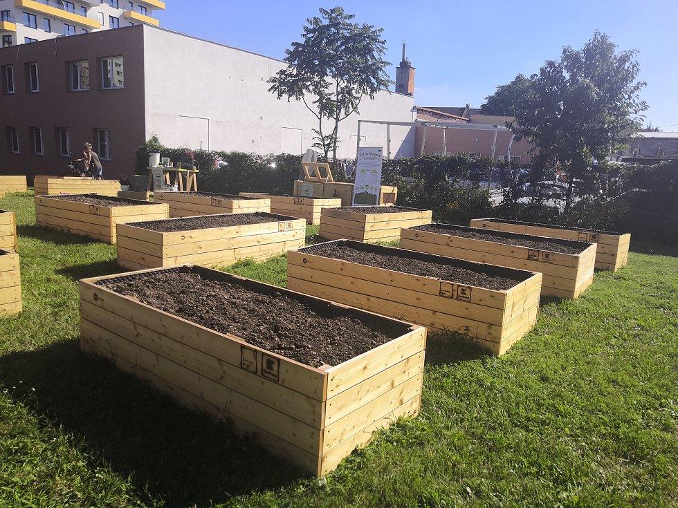 Vedle židenického Kauflandu si lidé mohou v nové komunitní zahradě zdarma vypěstovat třeba rajčata nebo bylinky.