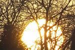 Magické oko mezo stromy.