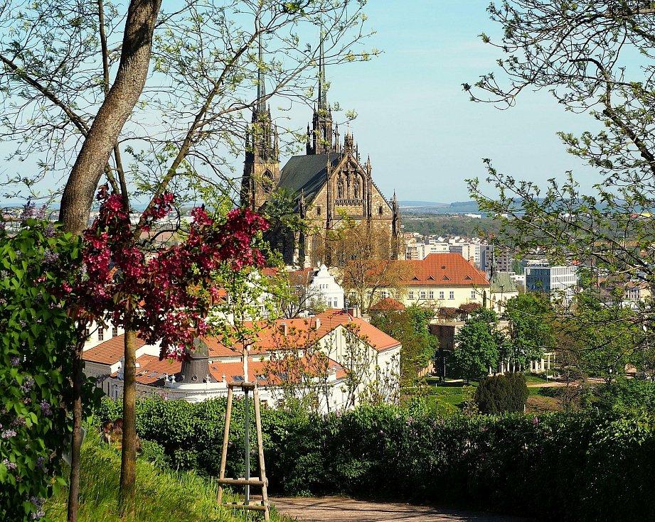 Jarní procházka na Špilberk voní šeříky.