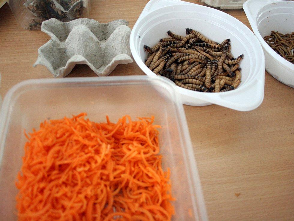 Ochutnávka hmyzu na brněnských veletrzích.
