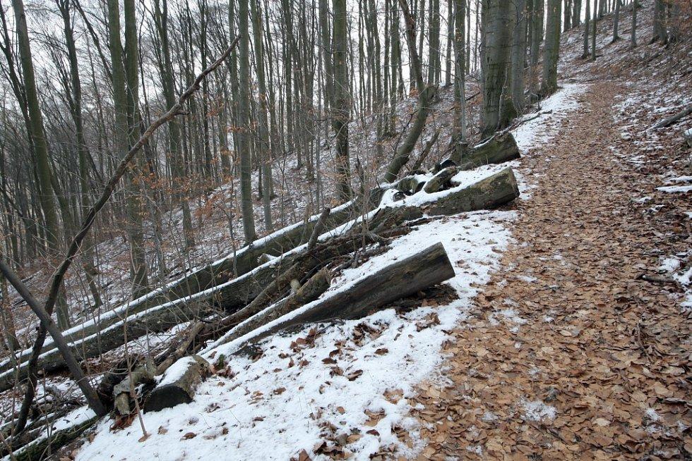 Zřícenina Nového hradu je dominanta krajiny nad údolím řeky Svitavy poblíž Adamova na Blanensku. Obklopují ji zachované husté listnaté lesy, které tvoří hlavně habry.