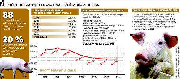 Počet chovaných prasat na jižní Moravě klesá.