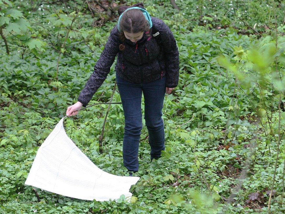 Odborníci a studenti z Masarykovy univerzity v Brně sbírali klíšťata v Pisárkách. Ke sběru využívají vlajky vyrobené z látkové pleny, na níž se roztoči lehce zachytí.