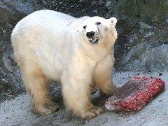 Medvěd UMCA