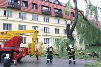Hasiče zaměstnal spadlý strom v Tilhonově ulici.