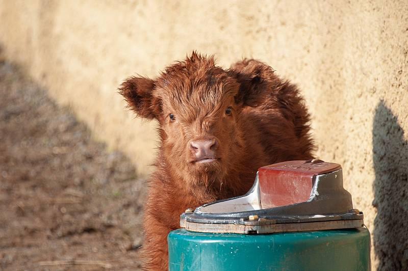 V prosinci loňského roku se ve vyškovské zoo narodilo několik mláďat.