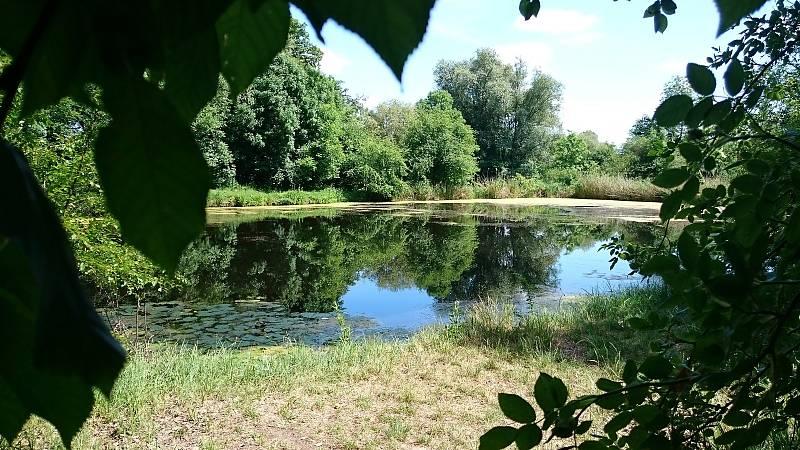 Jedno z míst, kam povedou výlety s odborníky - Holásecká jezera v Brně.